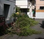 垣根の伐採